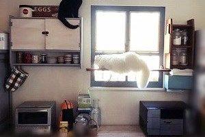 キッチンDIYその4☆アルミサッシを内窓で目隠し☆